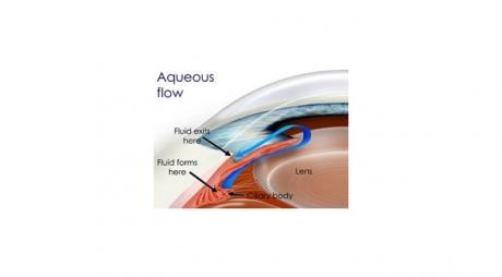 How to Protect your Eyesight from Glaucoma. Aqueous Humor flow inside the eye